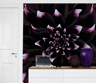 dahlia photo wall art